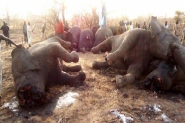Grand Katanga : la chasse aux braconniers se poursuit