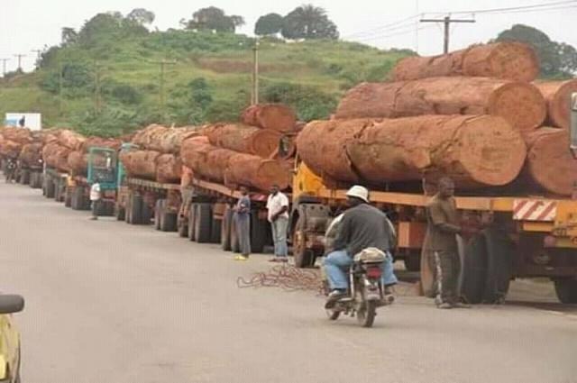 Haut-Katanga: plus de nouvelles coupes du bois rouges