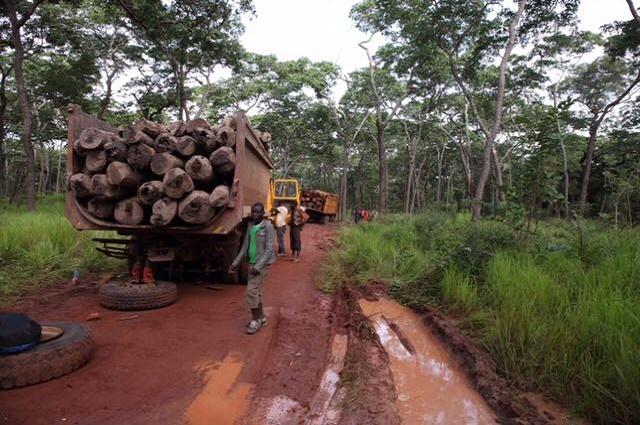 Haut-Katanga: les exploitants forestiers artisanaux plaident pour la levée de la suspension d'évacuation du bois rouge