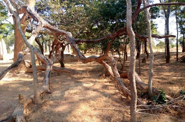 Haut-Katanga- 30 juin:retour sur le lieu de l'assassinat de Lumumba