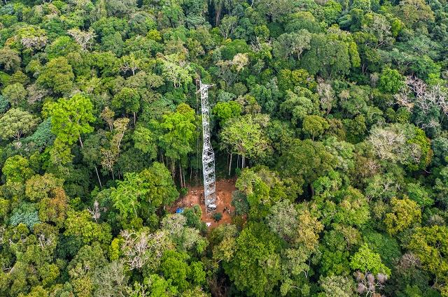 RDC: ouverture de la première tour à flux de carbone du bassin du Congo à Yangambi