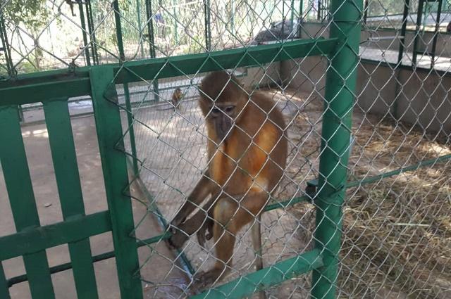 RDC-Lutte contre le braconnage: 20 singes rapatriés du Zimbabwe
