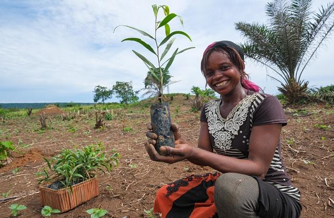 RDC: Yangambi célèbre la plantation d'un million d'arbres