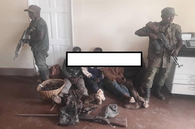Haut-Katanga: Encore des braconniers arrêtés dans le complexe Upemba –Kundelungu