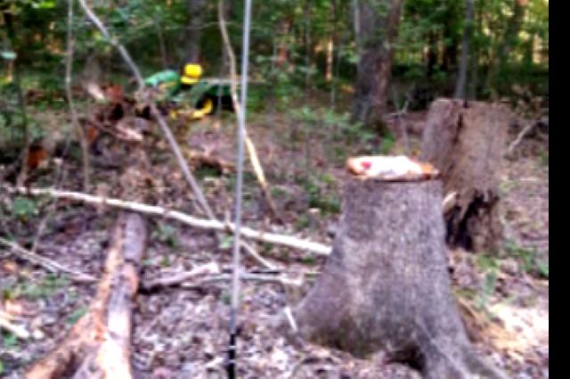 Déforestation:  La RDC préconise des techniques de maintien de foret