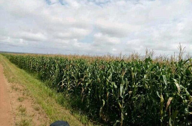 RDC: l'Allemagne octroie 54 millions de dollars aux 180 mille agriculteurs des Kivu