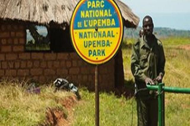 Haut-Lomami: un éléphant attaque et tue une dame à Malemba-Nkulu