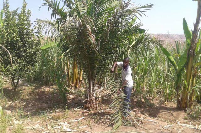 Lualaba: les agriculteurs de Busanga, des promesses d'une indemnisation incertaine