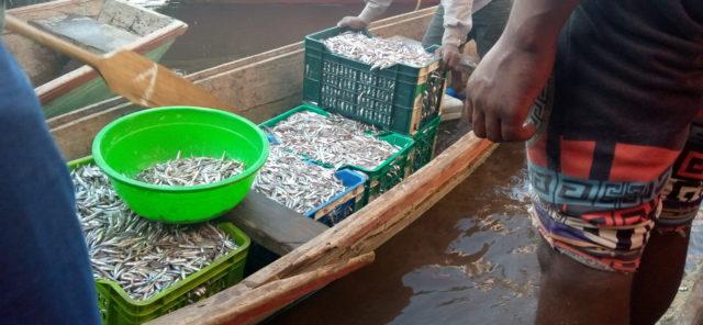Kalemie : Les pêcheurs du Lac Tanganyika  se plaignent de la baisse de la production