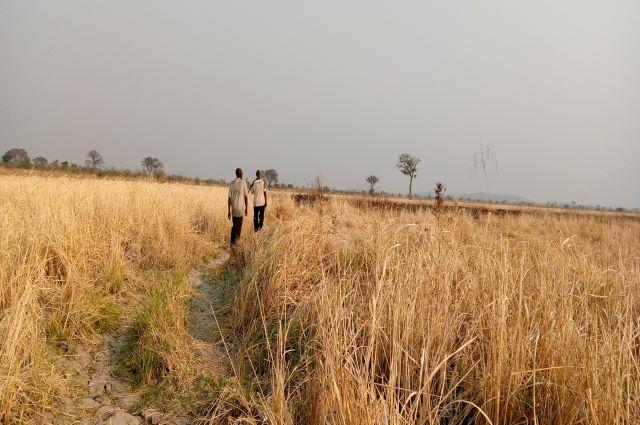 Lualaba : Une société coopérative pour booster la culture du riz à Bunkeya