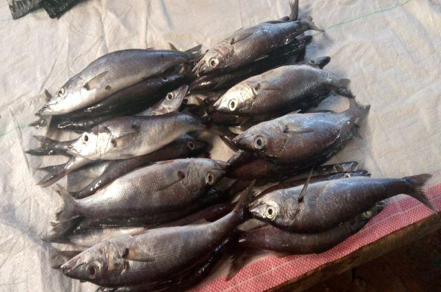 Province du Tanganyika: Les pêcheurs déplorent la faible rentabilité de leur activité